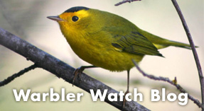 Link button for Daniel Edelstein's Warbler Watch Blog